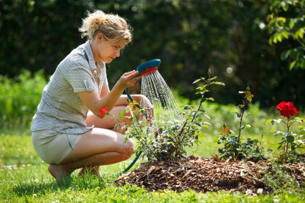 Cómo hacer fungicida casero con bicarbonato - ¿Por qué el bicarbonato es bueno a la hora de fabricar fungicidas?