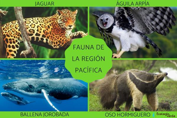 Flora y fauna de la Región Pacífica - Fauna de la Región Pacífica
