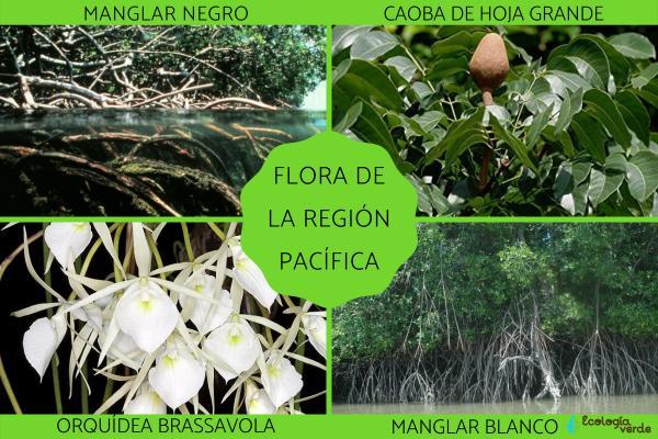 Flora y fauna de la Región Pacífica - Flora de la Región Pacífica