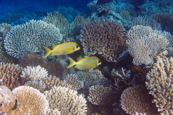 Qué es un arrecife de coral - Arrecifes de coral en peligro de extinción