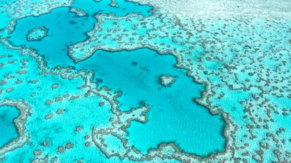 Qué es un arrecife de coral - Dónde están los arrecifes de coral