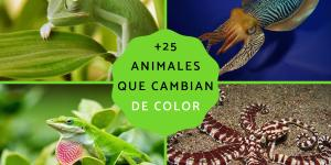 Animales que cambian de color