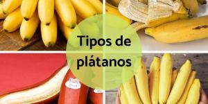 Tipos de plátanos