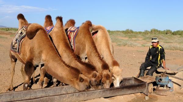 Ecosistema del desierto: características, flora y fauna - Fauna del ecosistema desértico
