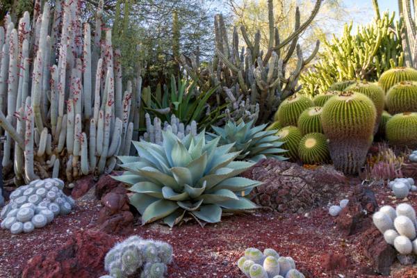 Ecosistema del desierto: características, flora y fauna - Flora del ecosistema desértico