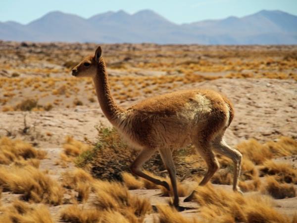 Ecosistema del desierto: características, flora y fauna - Lista de especies de animales del desierto