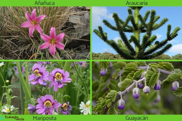 Flora y fauna de Chile - Flora de Chile