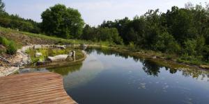 Piscinas ecológicas: cómo funcionan, ventajas e inconvenientes