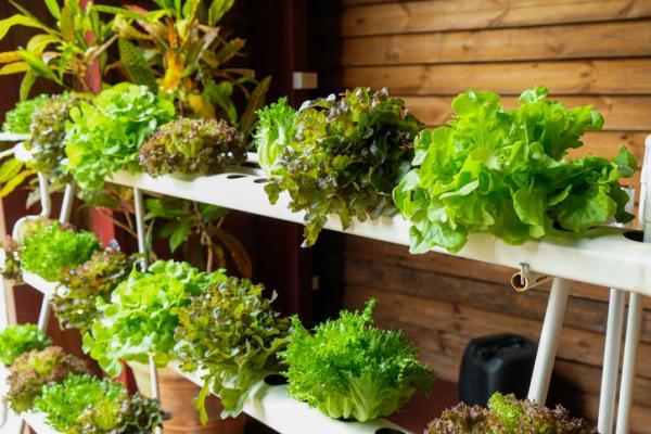 Cómo hacer un cultivo hidropónico casero - Beneficios y ventajas de hacer un cultivo hidropónico casero