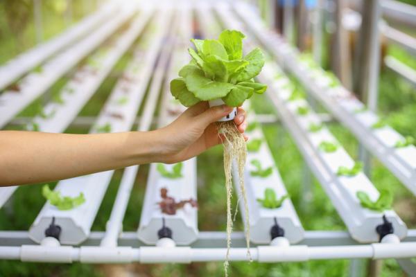 Cómo hacer un cultivo hidropónico casero - Cómo hacer una hidroponía casera paso a paso