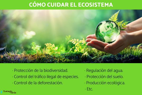 Cómo cuidar el ecosistema
