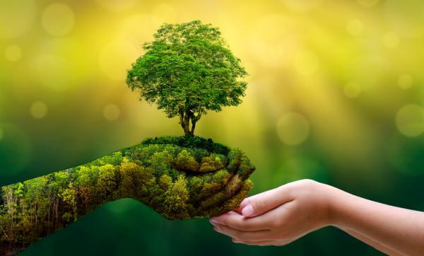 Cómo cuidar el ecosistema - Protección de la biodiversidad