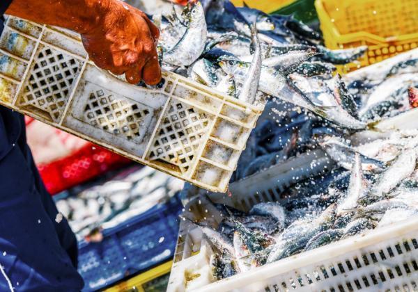 Cómo cuidar el ecosistema - Reducir la sobrepesca y gran consumo de carne