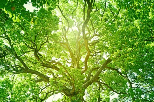 Beneficios de los árboles - Los árboles purifican el aire y nos dan oxígeno