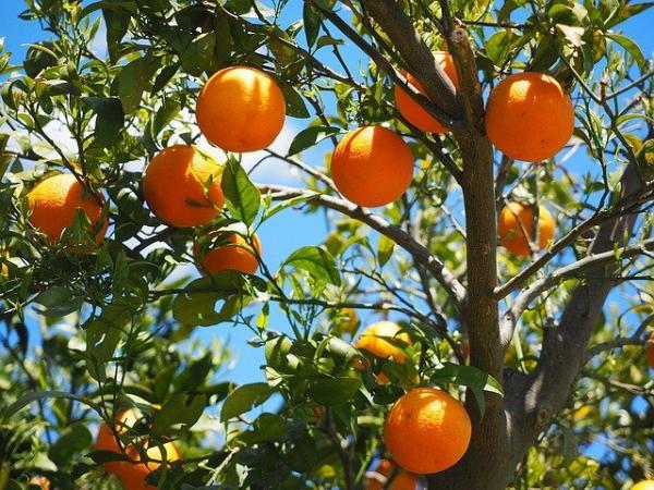 Beneficios de los árboles - Los árboles son fuente de alimento y materia primera