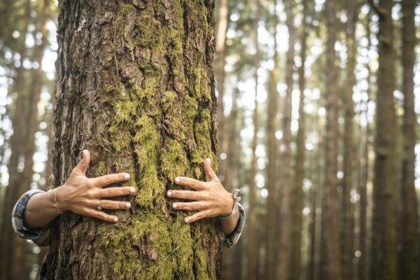 Beneficios de los árboles - Otros beneficios de los árboles
