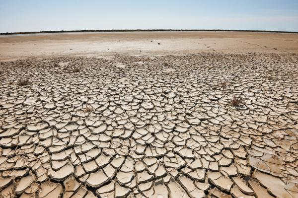 Desertización: qué es, causas y consecuencias