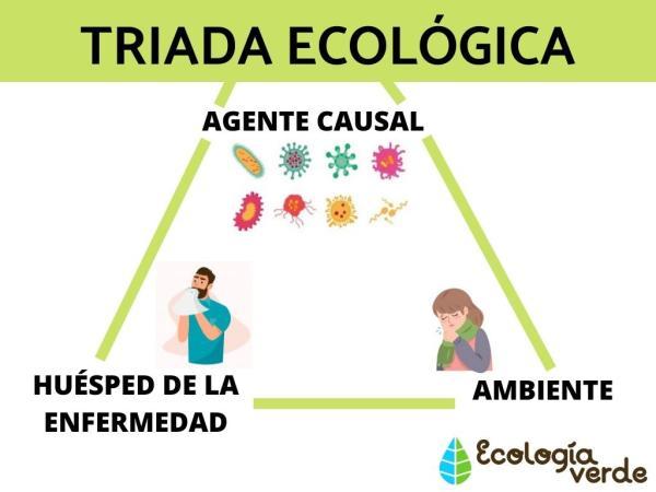 Triada ecológica: definición, elementos y ejemplos