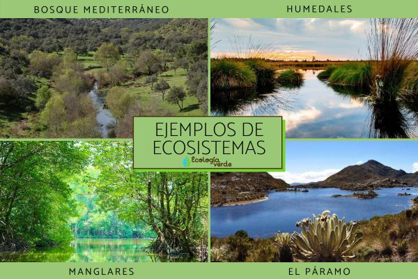 Diversidad de ecosistemas: qué es y ejemplos - Ejemplos de diversidad de ecosistemas