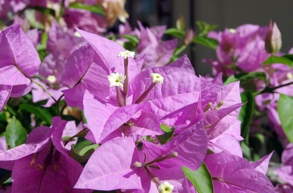 Qué son las brácteas de una flor, sus características y ejemplos - Qué son las brácteas