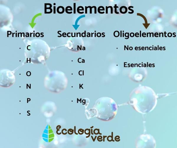 Qué son los bioelementos y su clasificación - Clasificación de los biolementos en primarios y secundarios