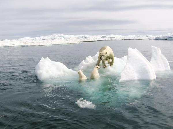 Argumentos frente a los negacionistas del cambio climático - El cambio climático actual forma parte de un ciclo natural