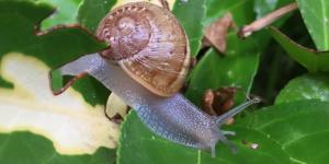 Cómo eliminar babosas y caracoles de forma natural
