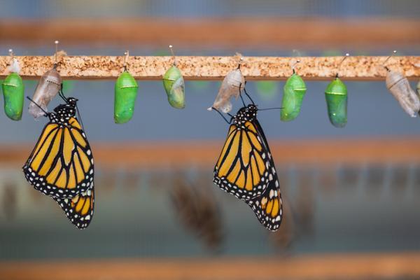 Qué es la metamorfosis - Metamorfosis de los insectos