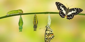 Qué es la metamorfosis