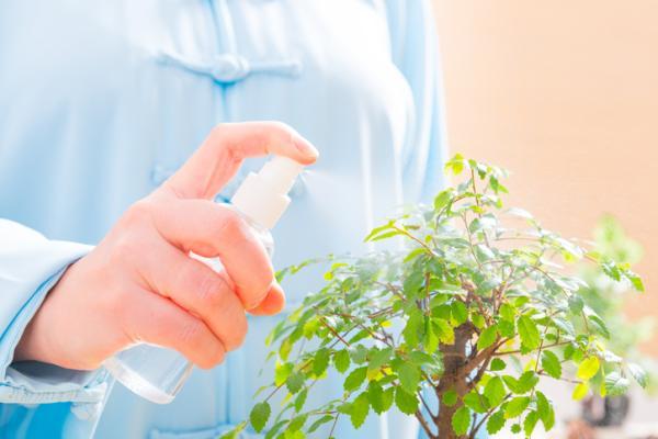 Cómo regar un bonsái