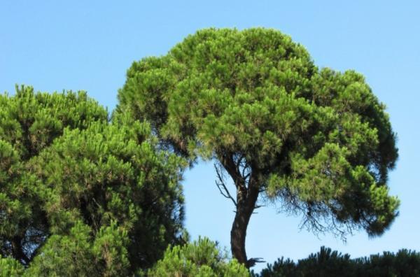 Cuánto tarda en crecer un árbol - Tiempo de crecimiento de un árbol
