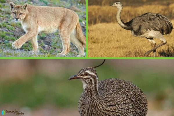 Región pampeana: características, flora y fauna - Fauna de la región pampeana