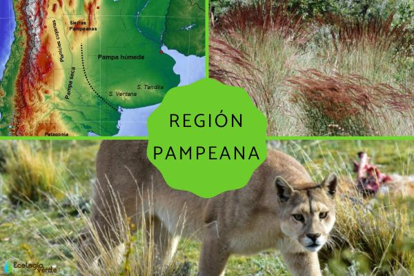 Región pampeana: características, flora y fauna