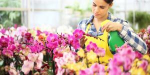 Fungicidas caseros para orquídeas