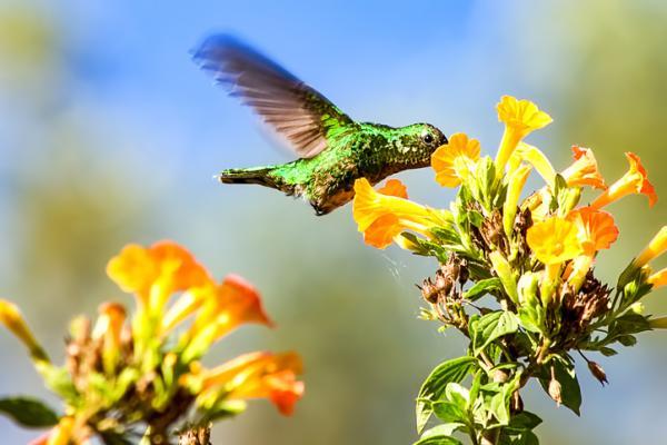Región Andina: características, flora y fauna - Región Andina: fauna