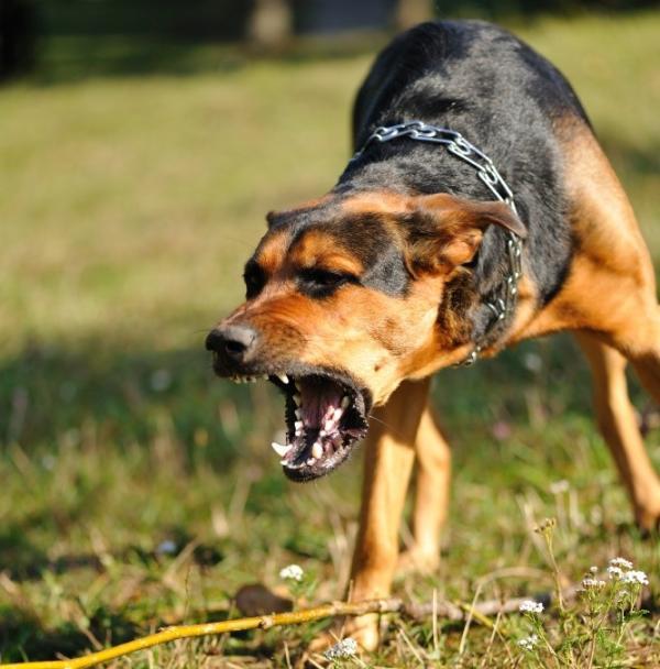 Cuáles son los animales más peligrosos del mundo - Qué hace peligroso a un animal