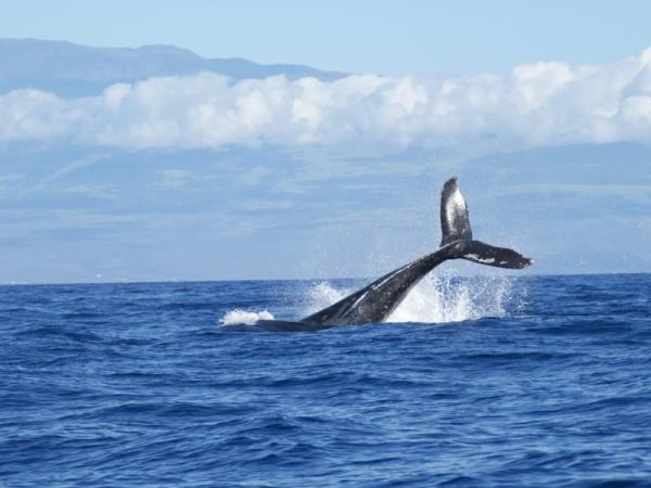 Cuál es la ballena más grande del mundo - Características de las ballenas