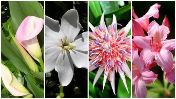 Plantas de interior ornamentales