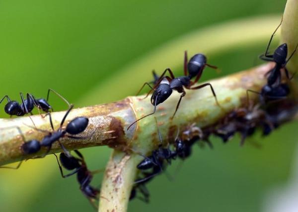 Animales que no duermen - Las hormigas