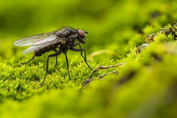 Animales que no duermen - Las moscas