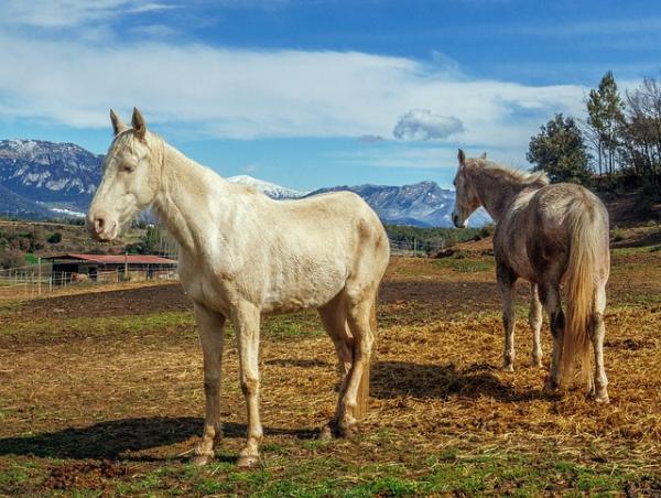Animales que no duermen - Los caballos