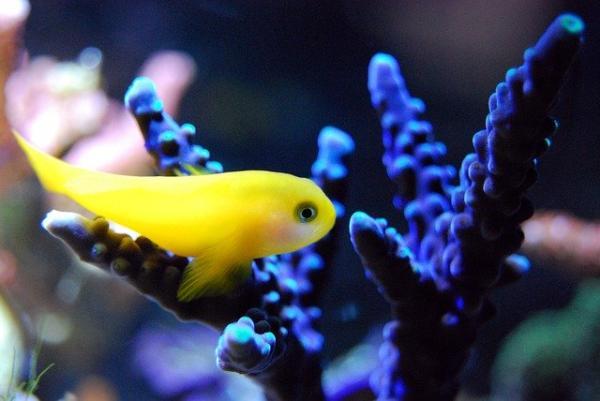 Animales que no duermen - Los peces
