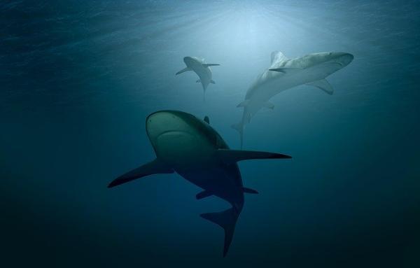 Animales que no duermen - Los tiburones