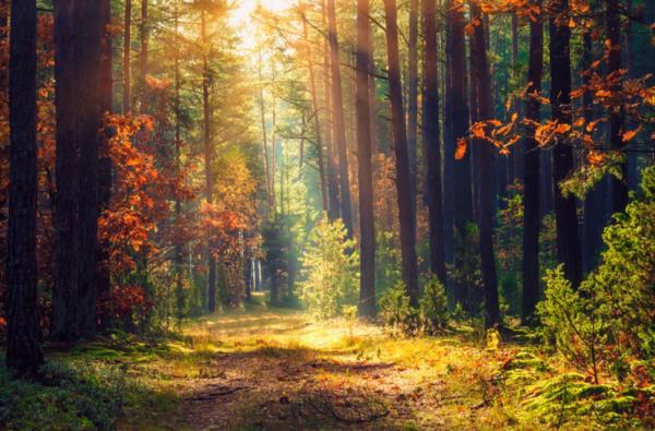 Tipos de bosques - Qué son los bosques