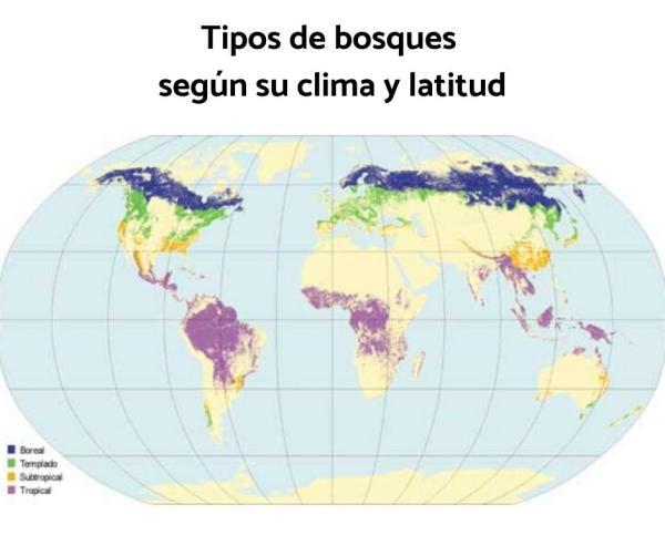Tipos de bosques - Tipos de bosques según su clima y latitud