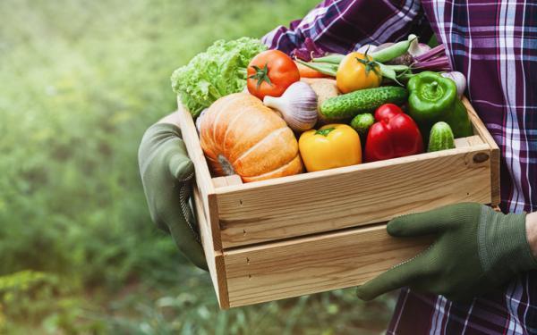 Alimentación sostenible: qué es y cómo lograrla