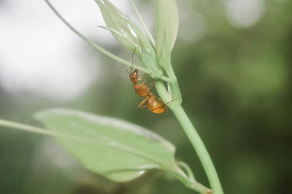 +10 animales de sangre fría - Hormigas, pequeños animales de sangre fría
