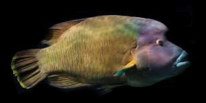 20 animales raros marinos en peligro de extinción
