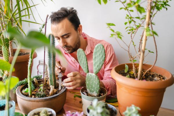 Cómo limpiar las hojas de las plantas - Cómo limpiar cactus y crasas