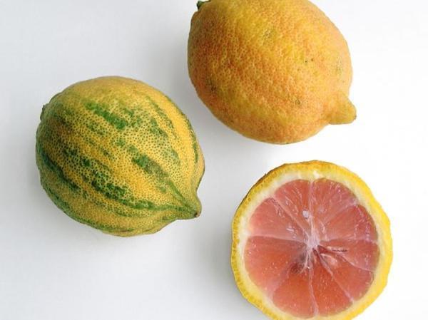 Tipos de limoneros - Variegated Pink